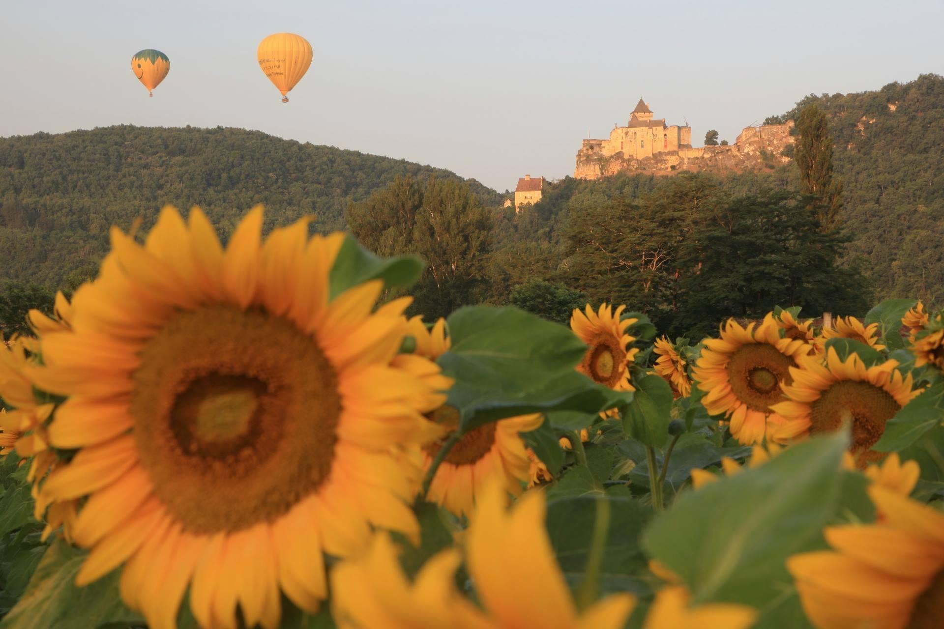 Photo représentant une montgolfière survolant un champs de tournesols au pied du chateau de Castelnaud la Chapelle en Dordogne