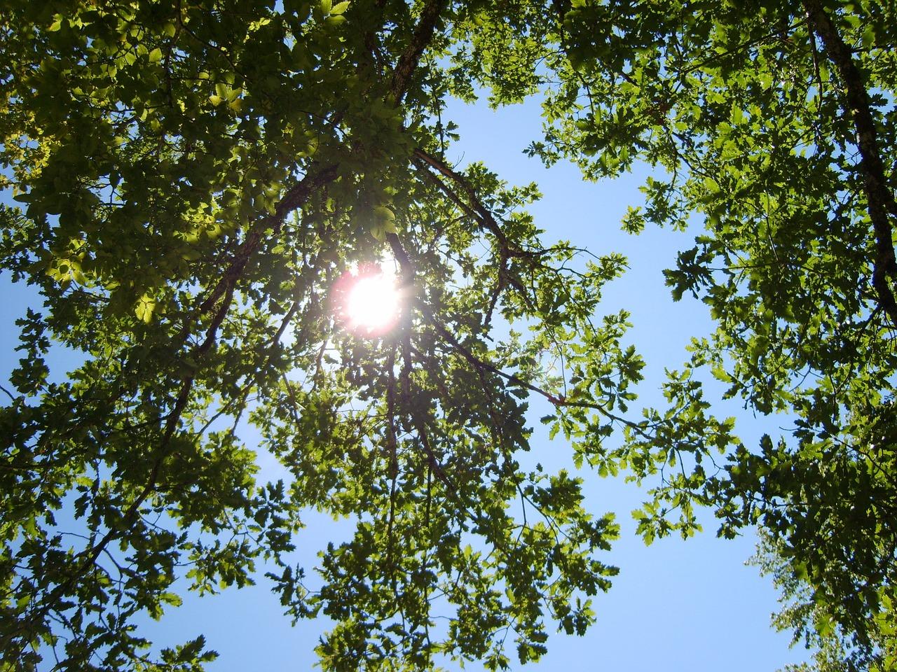 illustration du mois de juin avec un arbre vert